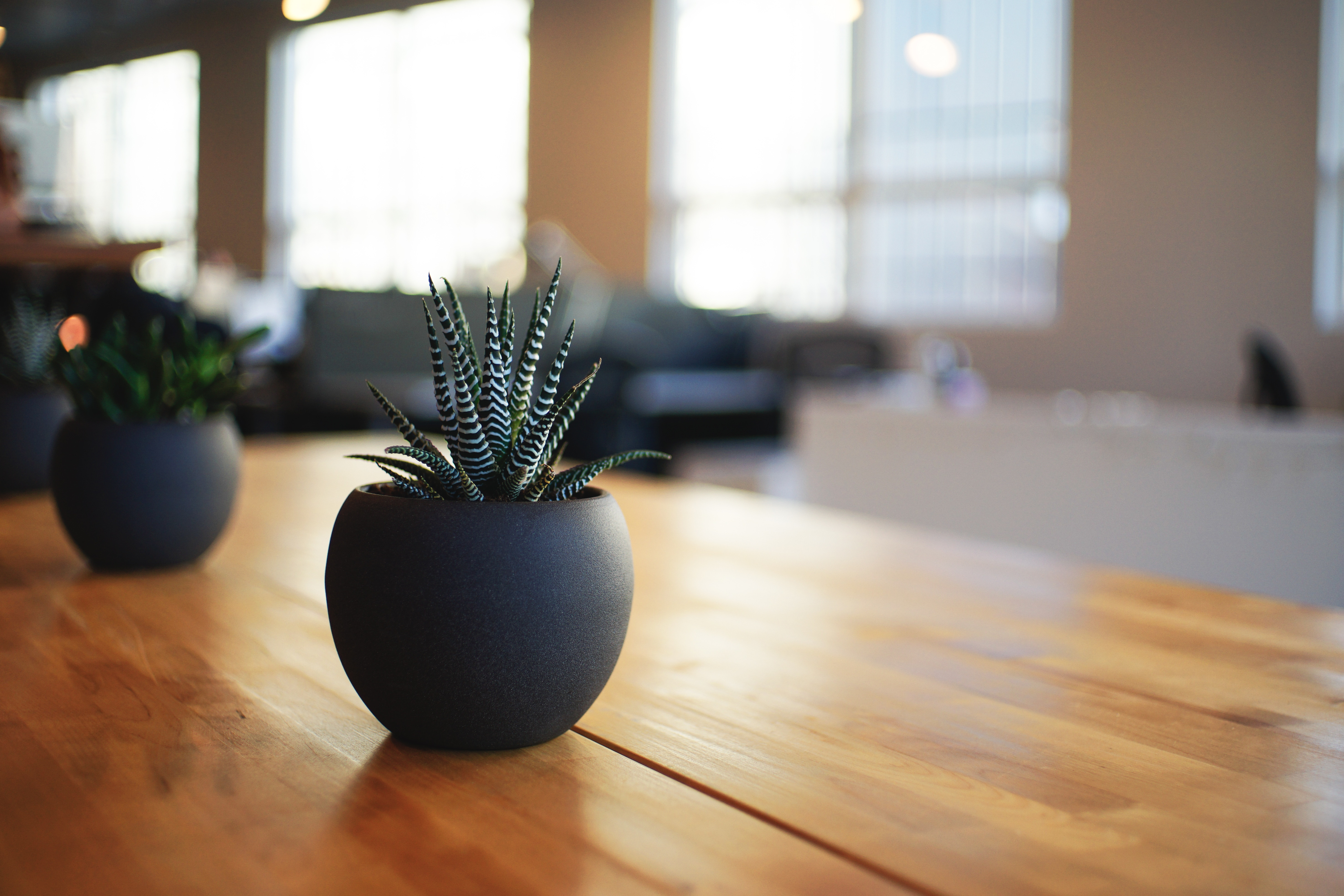 Plant-on-table