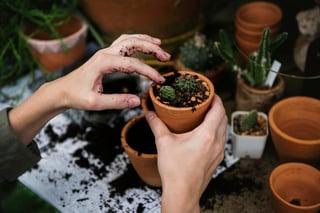 Pot-plant-garden